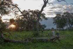 Scenes from safari.